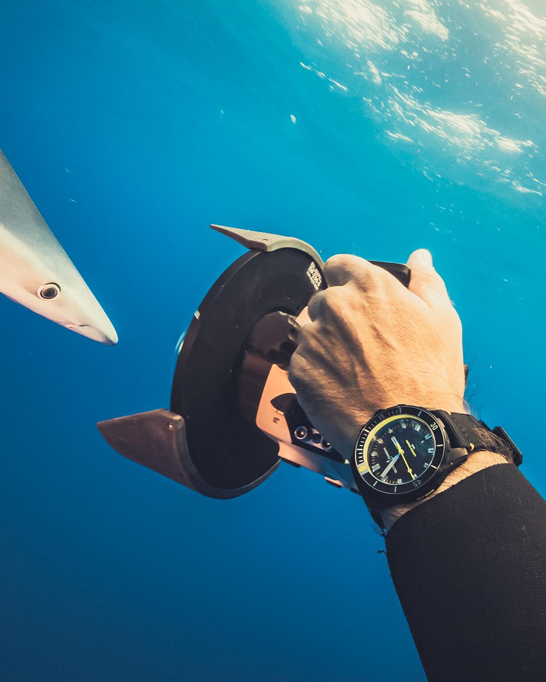 Diver Lemon Shark Watch unter Wasser